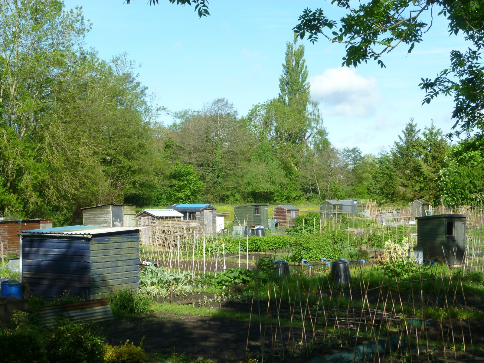Allotments - Cemetery Road