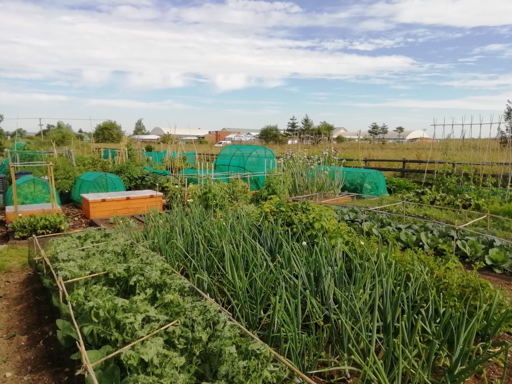 Allotments - Park Farm
